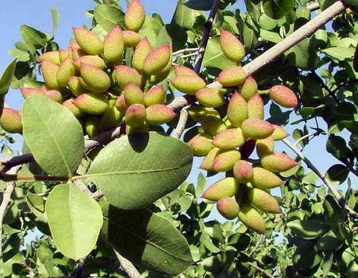 Сладости и деликатесы Кипра